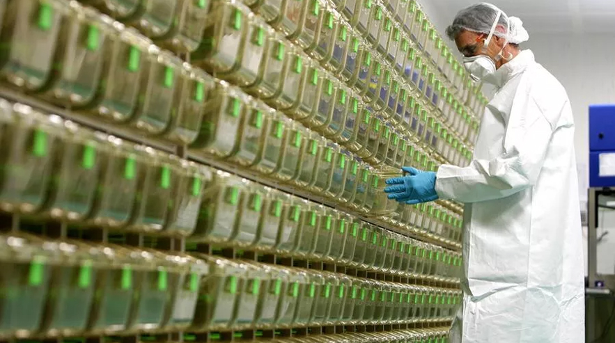 """Anglo-Italian Vaccine Is Born: """"testing Within The End Of April"""""""